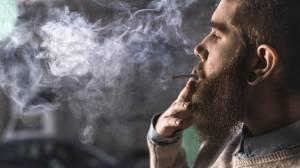 Marijuana Tenants Lease Landlord